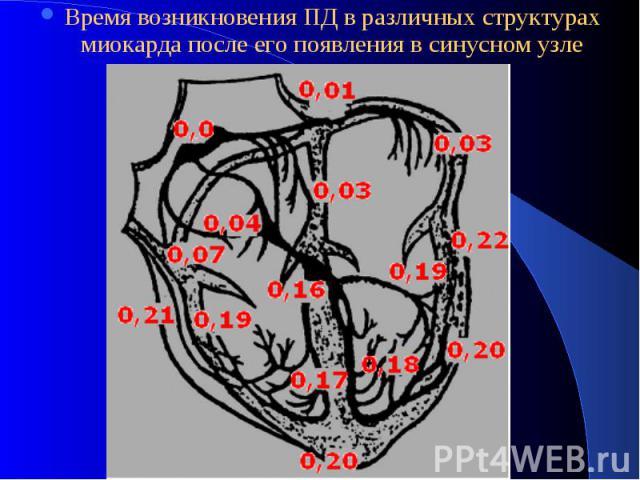 Время возникновения ПД в различных структурах миокарда после его появления в синусном узле Время возникновения ПД в различных структурах миокарда после его появления в синусном узле