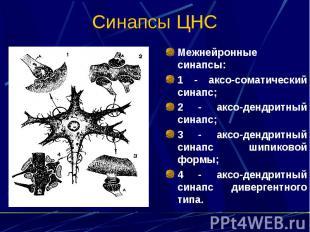 Синапсы ЦНС Межнейронные синапсы: 1 - аксо-соматический синапс; 2 - аксо-дендрит