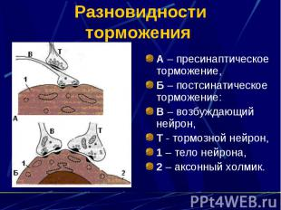 Разновидности торможения А – пресинаптическое торможение, Б – постсинатическое т