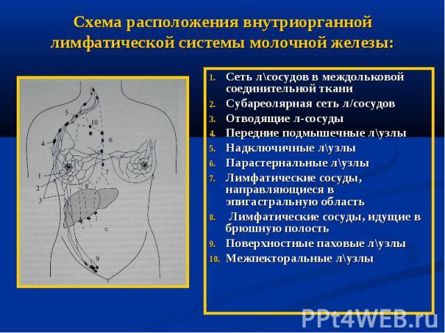 топографо анатомическое оьоснование операций на молочной жеезе ребенок
