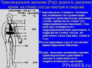 Трансмуральное давление (Ртр): разность давления крови на стенку сосуда изнутри