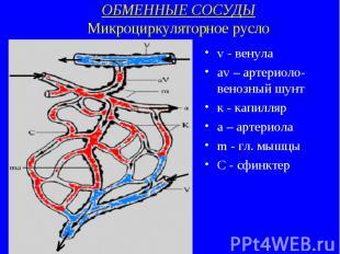 ОБМЕННЫЕ СОСУДЫ Микроциркуляторное русло v - венула av – артериоло-венозный шунт