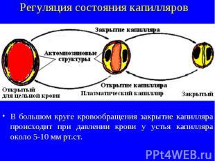 Регуляция состояния капилляров В большом круге кровообращения закрытие капилляра