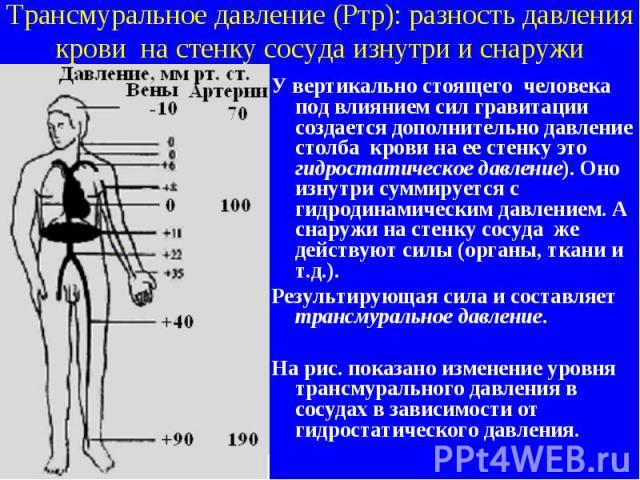 Трансмуральное давление (Ртр): разность давления крови на стенку сосуда изнутри и снаружи У вертикально стоящего человека под влиянием сил гравитации создается дополнительно давление столба крови на ее стенку это гидростатическое давление). Оно изну…