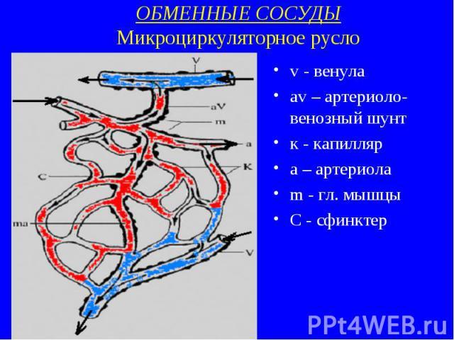 ОБМЕННЫЕ СОСУДЫ Микроциркуляторное русло v - венула av – артериоло-венозный шунт к - капилляр a – артериола m - гл. мышцы С - сфинктер