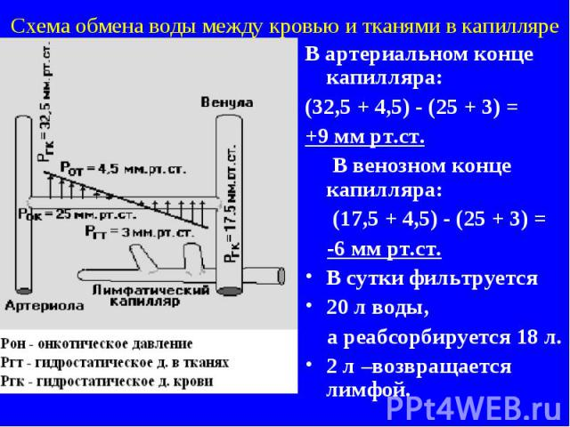Схема обмена воды между кровью и тканями в капилляре В артериальном конце капилляра: (32,5 + 4,5) - (25 + 3) = +9 мм рт.ст. В венозном конце капилляра: (17,5 + 4,5) - (25 + 3) = -6 мм рт.ст. В сутки фильтруется 20 л воды, а реабсорбируется 18 л. 2 л…