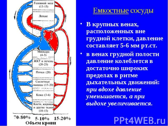 Емкостные сосуды В крупных венах, расположенных вне грудной клетки, давление составляет 5-6 мм рт.ст. в венах грудной полости давление колеблется в достаточно широких пределах в ритме дыхательных движений: при вдохе давление уменьшается, а при выдох…