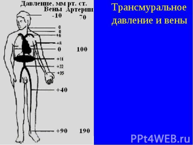 Трансмуральное давление и вены