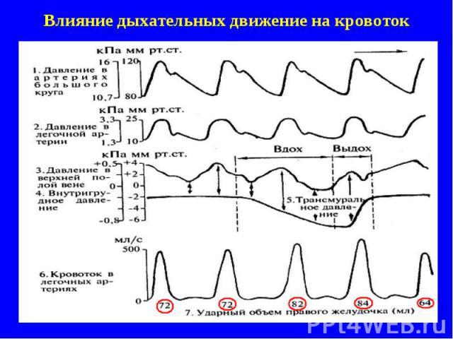 Влияние дыхательных движение на кровоток
