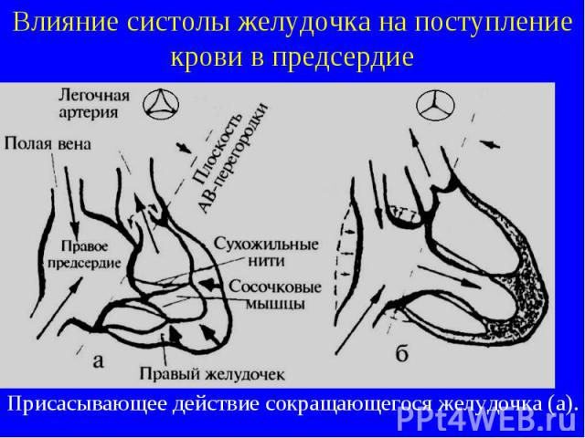 Влияние систолы желудочка на поступление крови в предсердие Присасывающее действие сокращающегося желудочка (а).