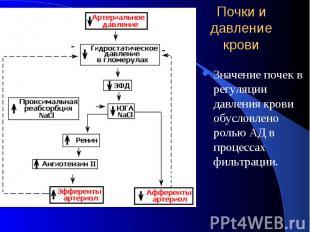 Почки и давление крови Значение почек в регуляции давления крови обусловлено рол