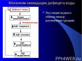 Механизм ликвидации дефицита воды Регуляция водного обмена между различными сред