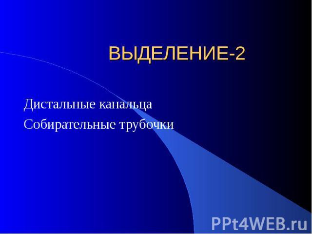 ВЫДЕЛЕНИЕ-2 Дистальные канальца Собирательные трубочки