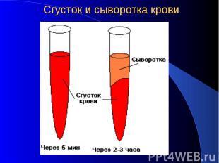 Сгусток и сыворотка крови