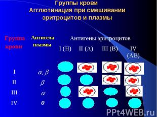 Группы крови Агглютинация при смешивании эритроцитов и плазмы