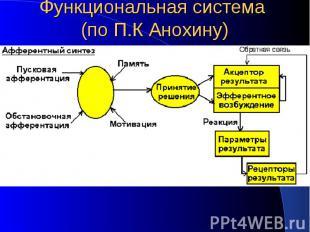 Функциональная система (по П.К Анохину)