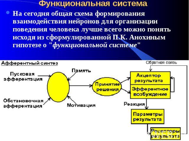 """Функциональная система На сегодня общая схема формирования взаимодействия нейронов для организации поведения человека лучше всего можно понять исходя из сформулированной П.К. Анохиным гипотезе о """"функциональной системе"""""""