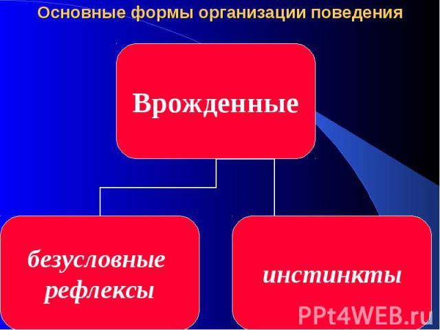 Основные формы организации поведения