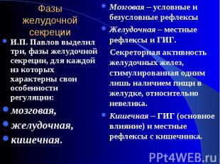 И.П. Павлов выделил три, фазы желудочной секреции, для каждой из которых характе