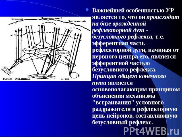 Важнейшей особенностью УР является то, что он происходит на базе врожденной рефлекторной дуги - безусловного рефлекса, т.е. эфферентная часть рефлекторной дуги, начиная от нервного центра его, является эфферентной частью безусловного рефлекса. Принц…