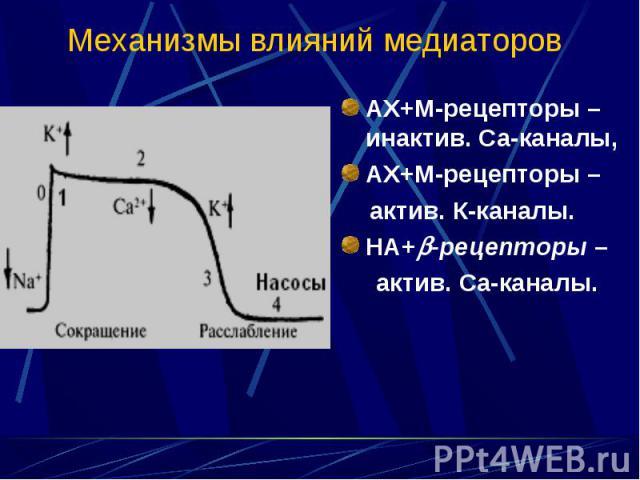 АХ+М-рецепторы – инактив. Са-каналы, АХ+М-рецепторы – инактив. Са-каналы, АХ+М-рецепторы – актив. К-каналы. НА+ -рецепторы – актив. Са-каналы.