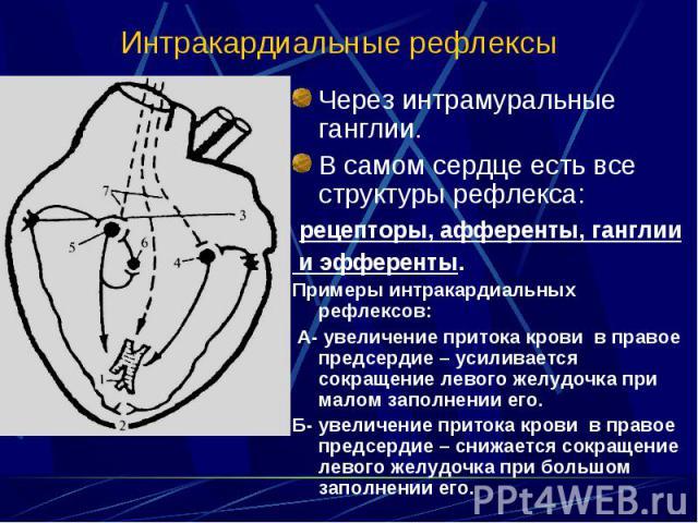 Через интрамуральные ганглии. Через интрамуральные ганглии. В самом сердце есть все структуры рефлекса: рецепторы, афференты, ганглии и эфференты. Примеры интракардиальных рефлексов: А- увеличение притока крови в правое предсердие – усиливается сокр…