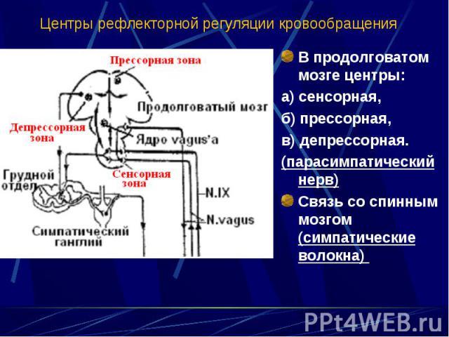 В продолговатом мозге центры: В продолговатом мозге центры: а) сенсорная, б) прессорная, в) депрессорная. (парасимпатический нерв) Связь со спинным мозгом (симпатические волокна)