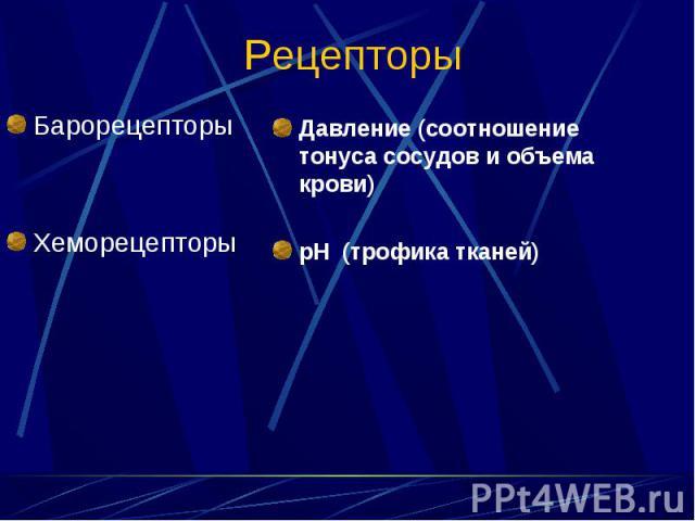 Барорецепторы Барорецепторы Хеморецепторы