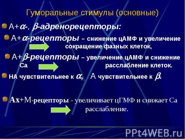 А+ -, -адренорецепторы: А+ -, -адренорецепторы: А+ -рецепторы – снижение цАМФ и увеличение Са сокращение фазных клеток, А+ -рецепторы – увеличение цАМФ и снижение Са расслабление клеток. НА чувствительнее к , А чувствительнее к . Ах+М-рецепторы - ув…