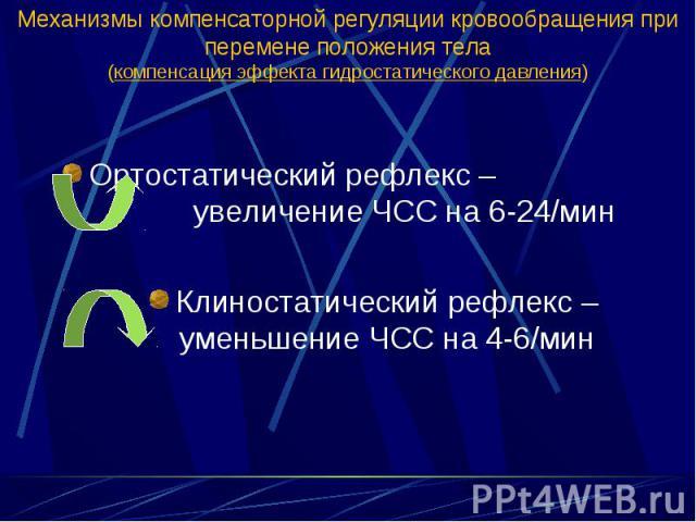 Ортостатический рефлекс – увеличение ЧСС на 6-24/мин Ортостатический рефлекс – увеличение ЧСС на 6-24/мин Клиностатический рефлекс – уменьшение ЧСС на 4-6/мин