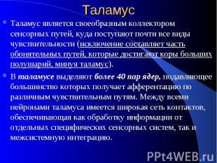 Таламус Таламус является своеобразным коллектором сенсорных путей, куда поступаю
