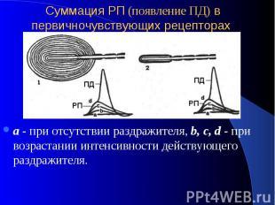 Суммация РП (появление ПД) в первичночувствующих рецепторах а - при отсутствии р