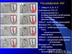 Расшифровка ЭКГ Зубцы P, Q, R, S, T и интервалы: PQ, ST и соотношение их с распр