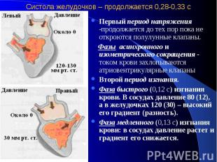 Систола желудочков – продолжается 0,28-0,33 с