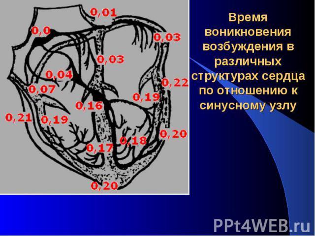 Время воникновения возбуждения в различных структурах сердца по отношению к синусному узлу