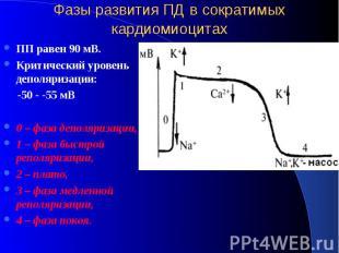 Фазы развития ПД в сократимых кардиомиоцитах ПП равен 90 мВ. Критический уровень