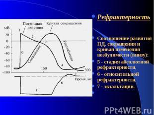 Рефрактерность Соотношение развития ПД, сокращения и кривая изменения возбудимос