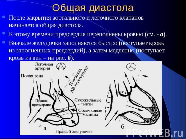 Общая диастола После закрытия аортального и легочного клапанов начинается общая диастола. К этому времени предсердия переполнены кровью (см. - а). Вначале желудочки заполняются быстро (поступает кровь из заполненных предсердий), а затем медленно (по…