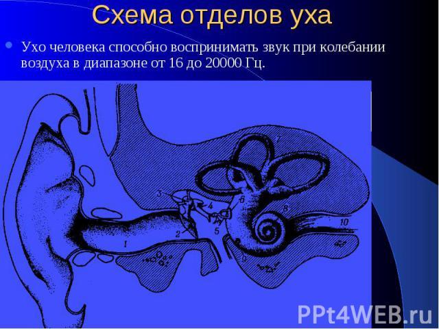 Схема отделов уха Ухо человека способно воспринимать звук при колебании воздуха в диапазоне от 16 до 20000 Гц.