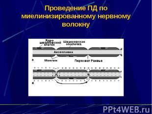 Проведение ПД по миелинизированному нервному волокну