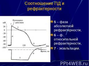 Соотношение ПД и рефрактерности 5 – фаза абсолютной рефрактерности, 6 – ф. относ