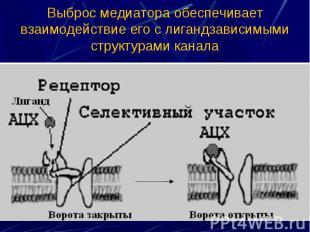 Выброс медиатора обеспечивает взаимодействие его с лигандзависимыми структурами