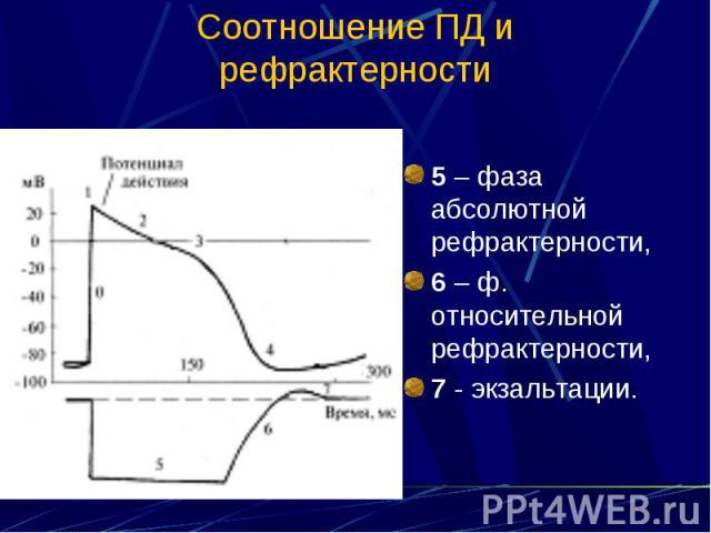 Соотношение ПД и рефрактерности 5 – фаза абсолютной рефрактерности, 6 – ф. относительной рефрактерности, 7 - экзальтации.
