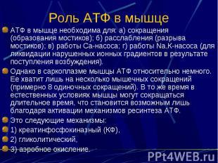 Роль АТФ в мышце АТФ в мышце необходима для: а) сокращения (образования мостиков