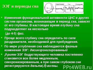 ЭЭГ и периоды сна Изменения функциональной активности ЦНС и других систем органи