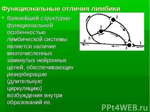 Функциональные отличия лимбики Важнейшей структурно-функциональной особенностью