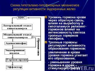 Схема гипоталамо-гипофизарных механизмов регуляции активности эндокринных желез