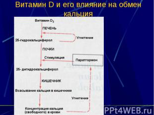Витамин D и его влияние на обмен кальция