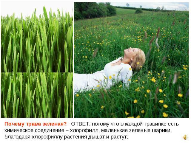 Почему трава зеленая? ОТВЕТ: потому что в каждой травинке есть химическое соединение – хлорофилл, маленькие зеленые шарики, благодаря хлорофиллу растения дышат и растут. Почему трава зеленая? ОТВЕТ: потому что в каждой травинке есть химическое соеди…