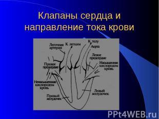 Клапаны сердца и направление тока крови .